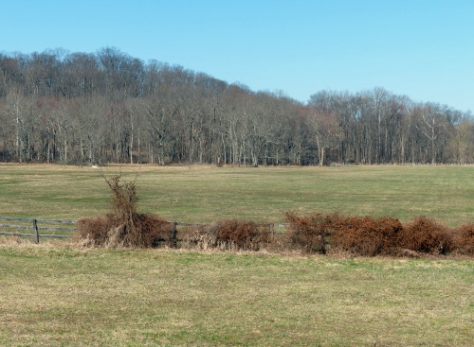 Field on Halter Road